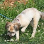 tinkerbell_july_5_2012 (17)