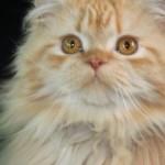 pina_september_4_2012 (2)smr
