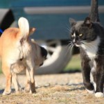 pug_cat_november_5_2012