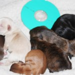 reese_pups_day_two_nov_16_2012 007