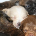 reeses_pup_december_3_2012 129 (1)smr