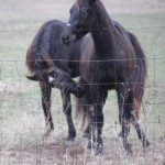 yearlings_playing_december_22_2011 120 (9)