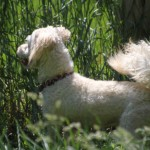 bentley_june_6_2013 (8)