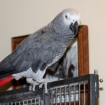 tobey_august_15_2013 (3)