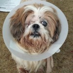 frankie and his cone sept 16 2014