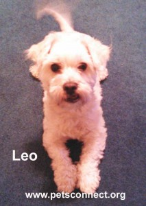 Leo2_feb_2015Awithname_ps