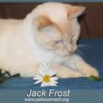 jack_frost_july_15_2015 (9)psf