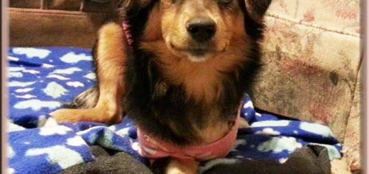 tawny_after_surgery_oct_2015 (1)ps