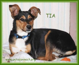 tia_October 29 2015 (4)ps