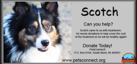 donate_scotch_male_aussie_feb_20_2016 (10)ps