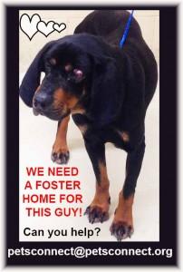 hound_need_fosterps