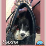 sasha_march_5_2016ps