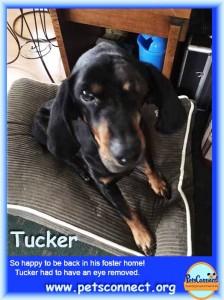 tucker_march_12_2016 (1)ps