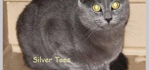 silver_toes_may_1_2016 (5)ps