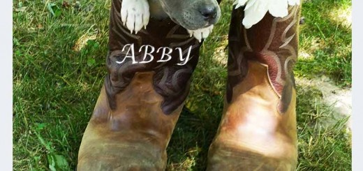 abby_pit_pup_june_2016 (9)ps