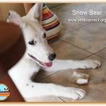 snow_bear__july_6_2016 (1)ps