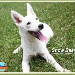 snow_bear__july_6_2016 (6)ps