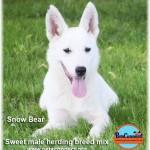 snow_bear_july_6_2016 (4)ps