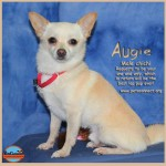 augie_september_22_2016-6ps