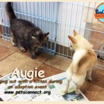 augis_cat_adoption_center_sept_2016ps