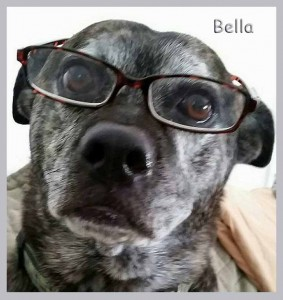 bella_adopted_boston_kelly_nelsons_nov_2016ps