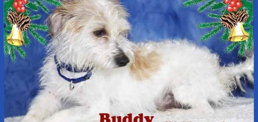 buddy_december_9_2016-2ps