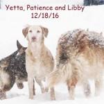 patience_yetta_libby_dec_18_2016-096