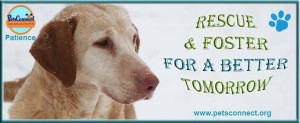 rescue_foster_banner_patience_dec_18_2016-1ps