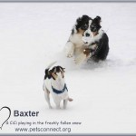 baxter_cici_jan_30_2017 (1)ps