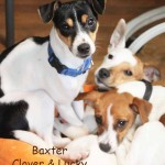 baxter_lucky_clover_jan_31_2017ps