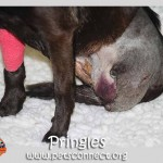 pringle_feb_26_2017 (4)ps