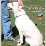 White_Shadow_april_1_2017 (4)ps