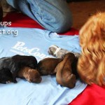 april_2_2017_pups 018ps