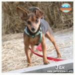 jax_april_24_2017 (1)ps