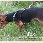 jax_april_24_2017 (2)ps