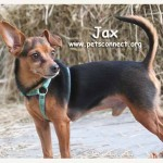 jax_april_24_2017 (5)ps