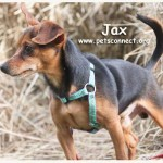jax_april_24_2017 (6)ps