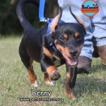 benny_june_23_2017 131 (20)ps