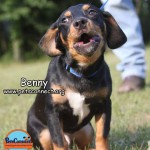 benny_june_23_2017 131 (9)ps