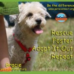 adopt_rescue_foster_gracie_july_3_2015 (4)ps