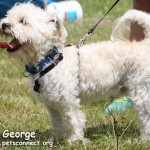 george_july_3_2015 (10)ps