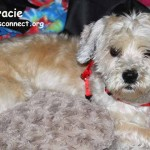 gracie_july_3_2015 (1)ps