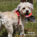 gracie_july_3_2015 (8)ps