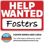 PC_foster_promos2