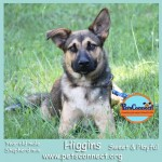 higgins_july_29_2017 (1)ps