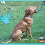 murphy_july_29_2017 (4)ps