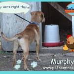 murphy_july_29_2017 (7)ps