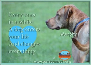 quote_murphy_july_29_2017 (2)ps