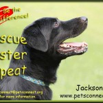 rescue_adopt_plea_jackson_july_29_2017 (7)ps