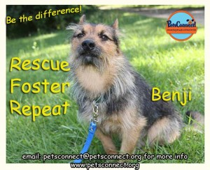 rescue_benji_july_29_2017 (2)ps